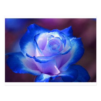 blossoms vines petal rose flowers flower blue love postcard
