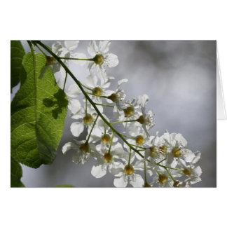 Blossums de la flor blanca de Sun Tarjeta