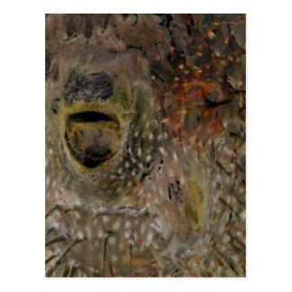 Blowfish Incident Postcard
