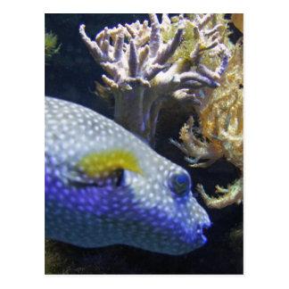 blowfish tarjetas postales