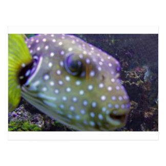 blowfish tarjeta postal