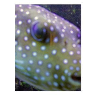 blowfish postal