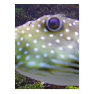 blowfish postales