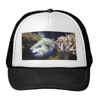 blowfish trucker hat
