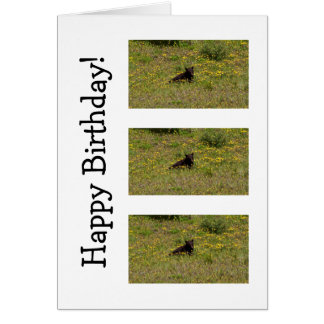BLST Black Bear Snack Time Stationery Note Card