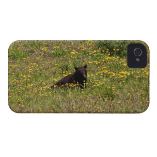 BLST Black Bear Snack Time Case-Mate iPhone 4 Case