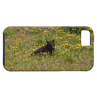 BLST Black Bear Snack Time iPhone 5 Covers