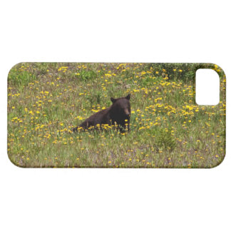 BLST Black Bear Snack Time iPhone 5 Case