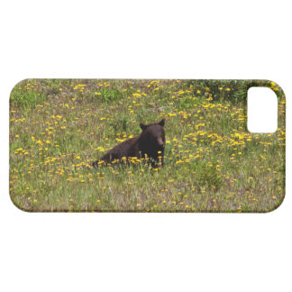 BLST Black Bear Snack Time iPhone 5 Cover