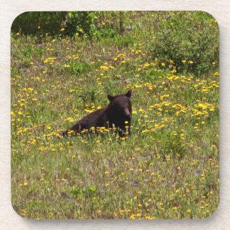 BLST Black Bear Snack Time Coaster