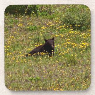 BLST Black Bear Snack Time Coasters