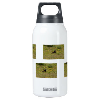 BLST Black Bear Snack Time 10 Oz Insulated SIGG Thermos Water Bottle