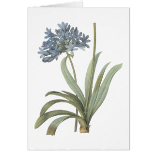 blue African lily(Agapanthus) by Redouté Card