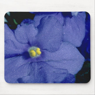Blue African violet flowers Mouse Pad