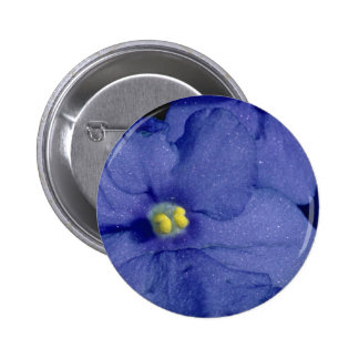 Blue African violet flowers Pinback Button