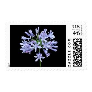 Blue Agapanthus Blue Postage stamp