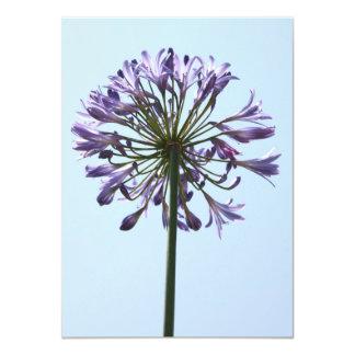 Blue Agapanthus Card