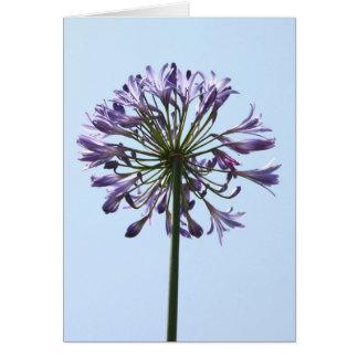 Blue Agapanthus Greeting Card