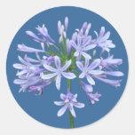 Blue Agapanthus Classic Round Sticker