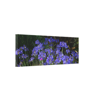 Blue Agapanthus Flowers Wrapped Canvas Print