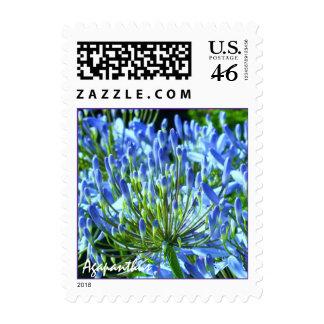 Blue Agapanthus Stamp