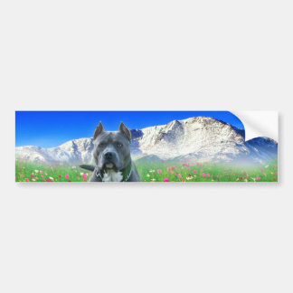 Blue American Pit Bull Terrier, Pikes Peak Bumper Sticker