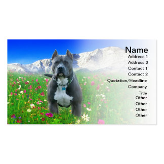 Blue American Pit Bull Terrier, Pikes Peak Business Card