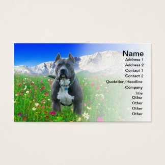 Blue American Pit Bull Terrier, Pikes Peak Business Card