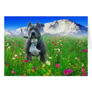 Blue American Pit Bull Terrier, Pikes Peak Greeting Card