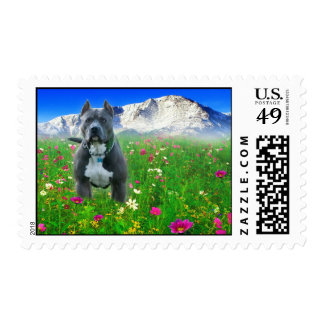 Blue American Pit Bull Terrier, Pikes Peak Postage Stamp