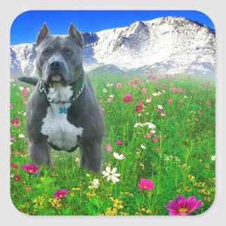 Blue American Pit Bull Terrier, Pikes Peak Square Sticker