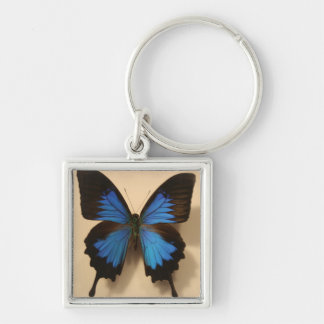 Blue and Black  Butterfly Keychain