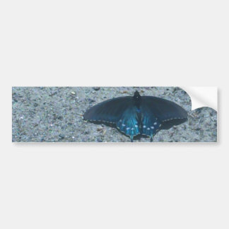 blue and black butterfly on sandy beach bumper sticker