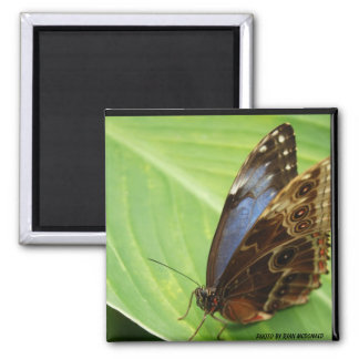 Blue and Brown Butterfly Magnet