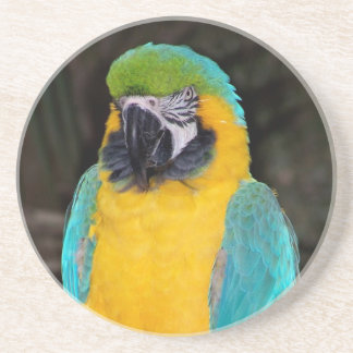 Blue and gold macaw against dark background coaster