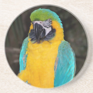 Blue and gold macaw against dark background drink coaster
