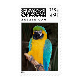 Blue and gold macaw against dark background postage