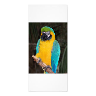 Blue and gold macaw against dark background rack card