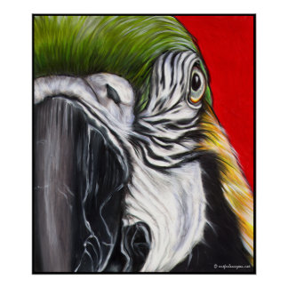 Blue and Gold Macaw Art Print