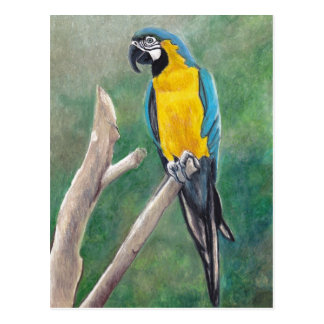 Blue and Gold Macaw Bird Art Postcard