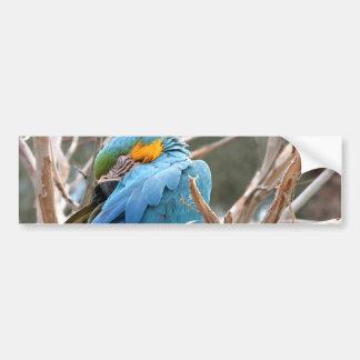 Blue And Gold Macaw Bumper Sticker