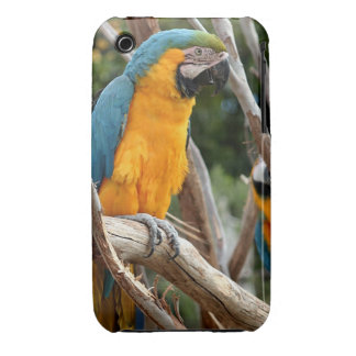 Blue And Gold Macaw Case-Mate iPhone 3 Cases