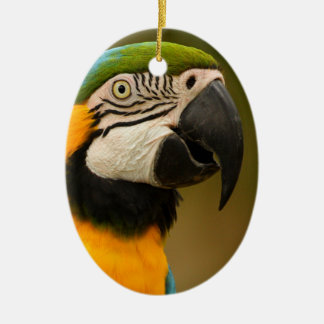 blue and gold macaw ceramic ornament