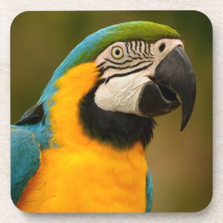 blue and gold macaw coasters