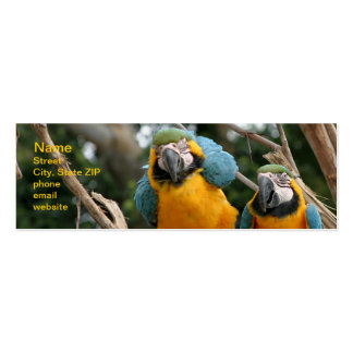 Blue And Gold Macaw Double-Sided Mini Business Cards (Pack Of 20)