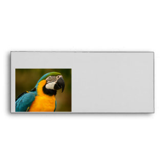 blue and gold macaw envelope