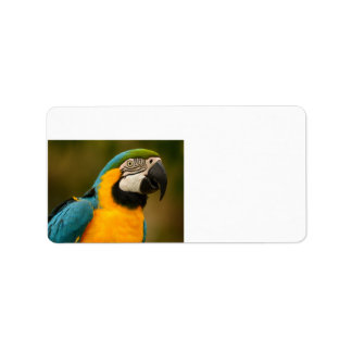 blue and gold macaw label