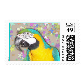 Blue and Gold Macaw (Medium) Stamps