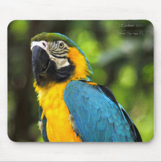 Blue and Gold Macaw Mouse Pad