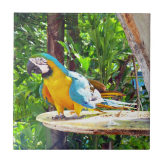 Blue and Gold Macaw Parrot Ceramic Tile